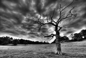 Tan solo un árbol 1