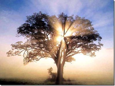 foto de árbol