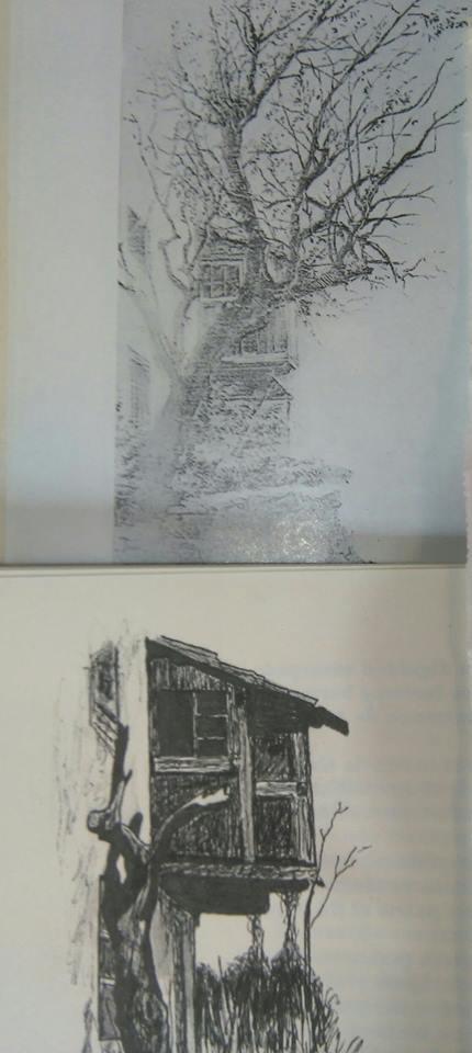 Almendro Finca Estévanez 1900-2006 (1)